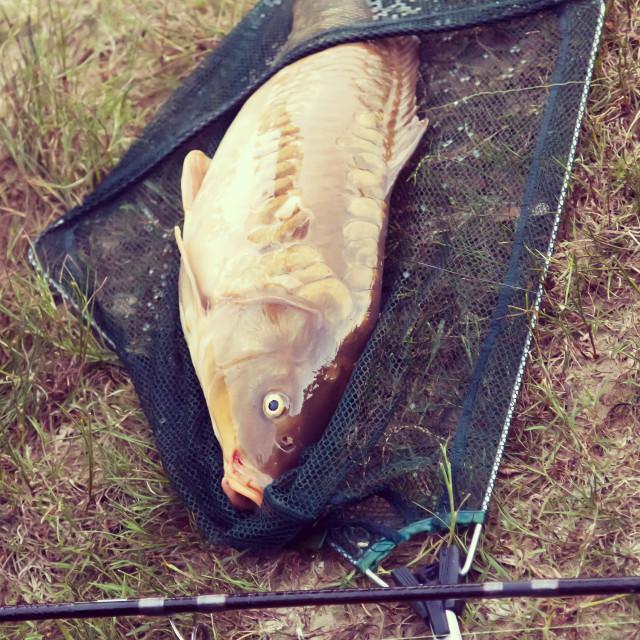 """""""Fishing a big carp at the lake"""" stock image"""