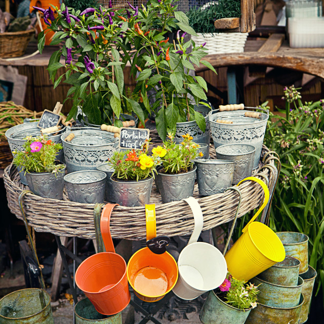 """""""Flower pots and colorful vases at open air shop"""" stock image"""