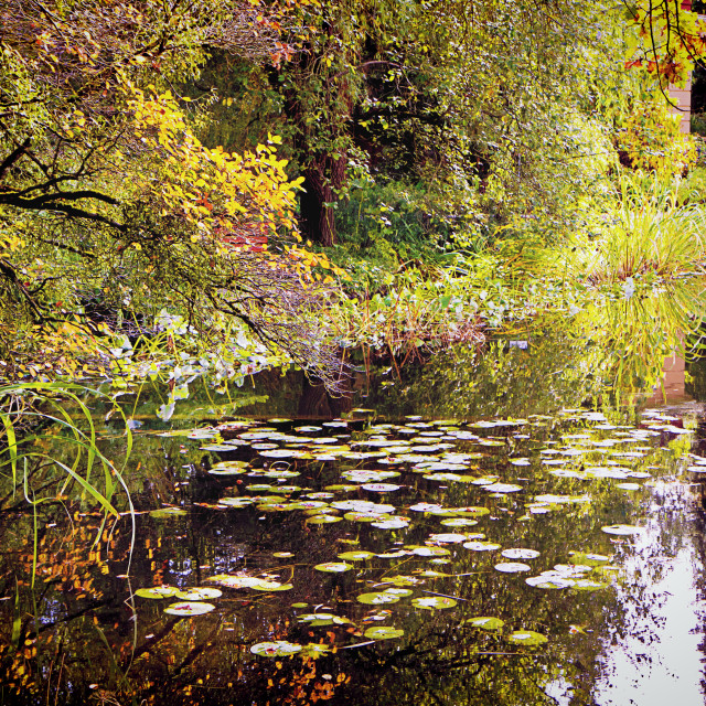 """""""Pond in autumn with lotus plants, red leaves and reflections"""" stock image"""