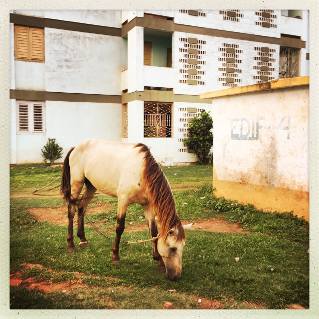 """""""A tied-up Horse in Trinidad"""" stock image"""