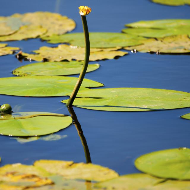"""Pond"" stock image"