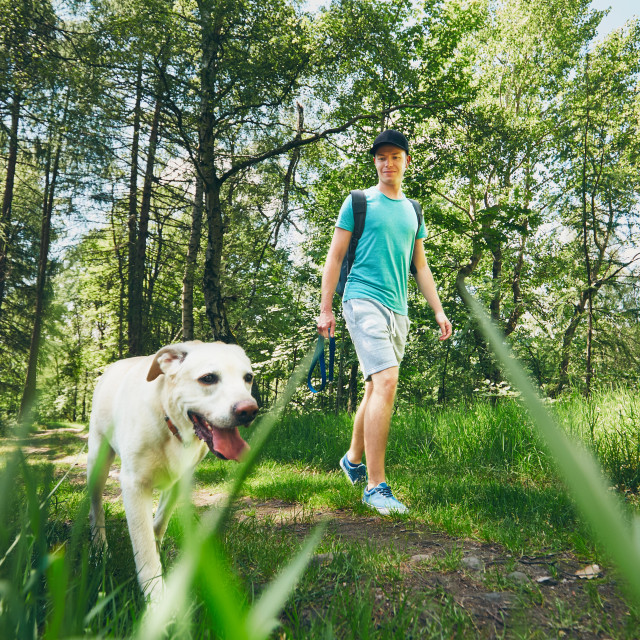 """Young man walking with his dog (labrador retriever) in forest. Summer time and vacations theme."" stock image"