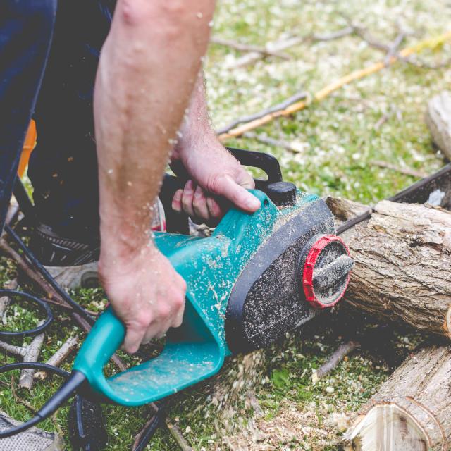 """Lumberjack cuts a tree in the garden"" stock image"