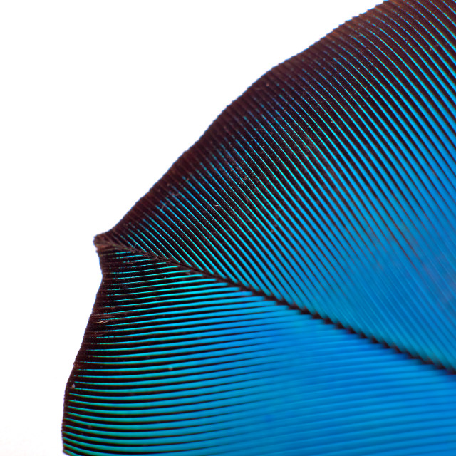 """""""colourfull feather of parrot"""" stock image"""