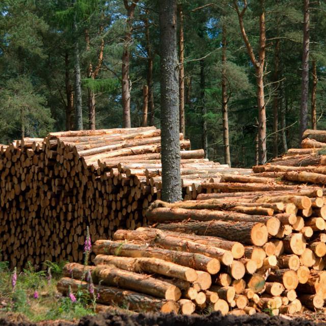 """Timber harvesting"" stock image"