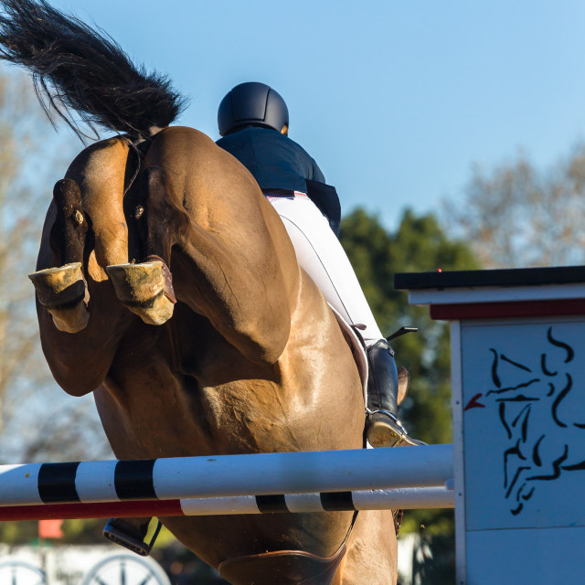 """Horse Jumping Rider Closeup"" stock image"