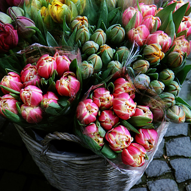 """Tulip bouquets on sell at the market"" stock image"