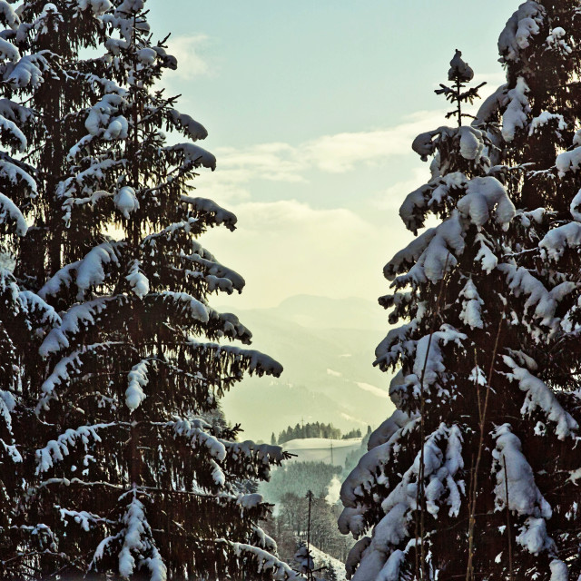 """Austria, valley winter landscape between fir trees"" stock image"