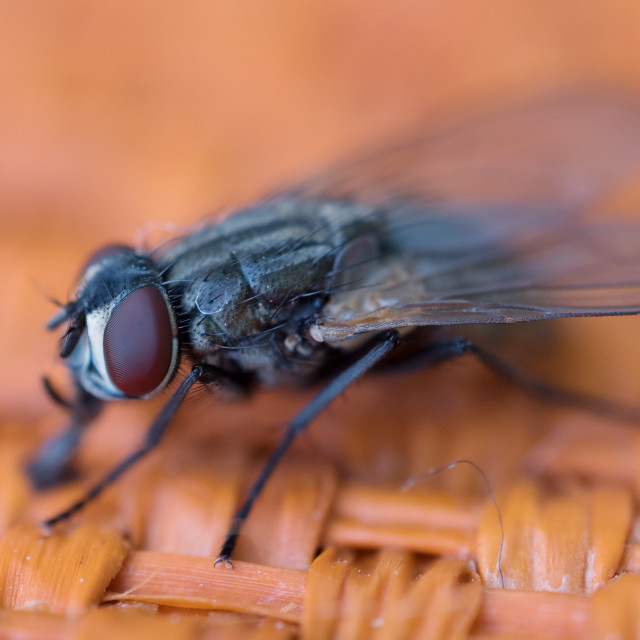 """""""insect fly"""" stock image"""