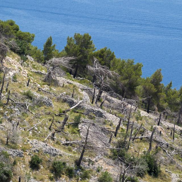"""Deforestation in the Dalmatian coast in Croatia"" stock image"