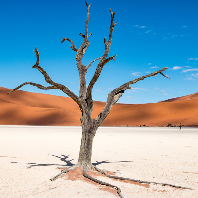 """Amazing landscape in Deadvlei, Namibia"" stock image"