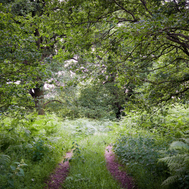 """Sherwood Forest in Nottinghamshire,UK."" stock image"