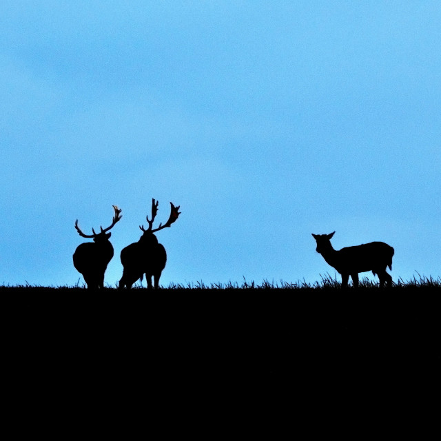 """""""Deer"""" stock image"""
