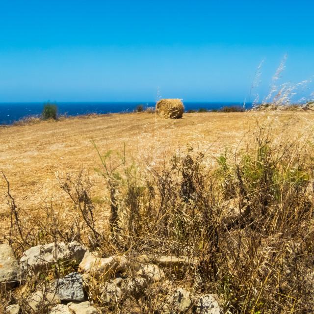 """Gozo harvest [3]"" stock image"