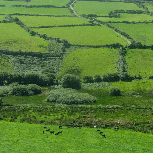"""fields near Dingle , Ireland"" stock image"