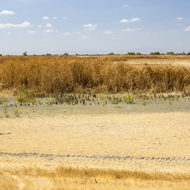 """""""The Kern Valley Wildlife Refuge in California's Central Valley was created as..."""" stock image"""