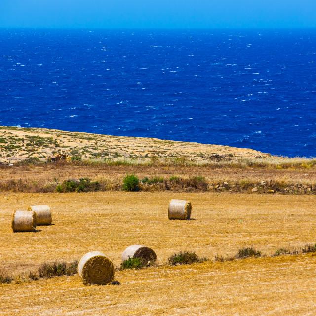 """Gozo harvest [2]"" stock image"