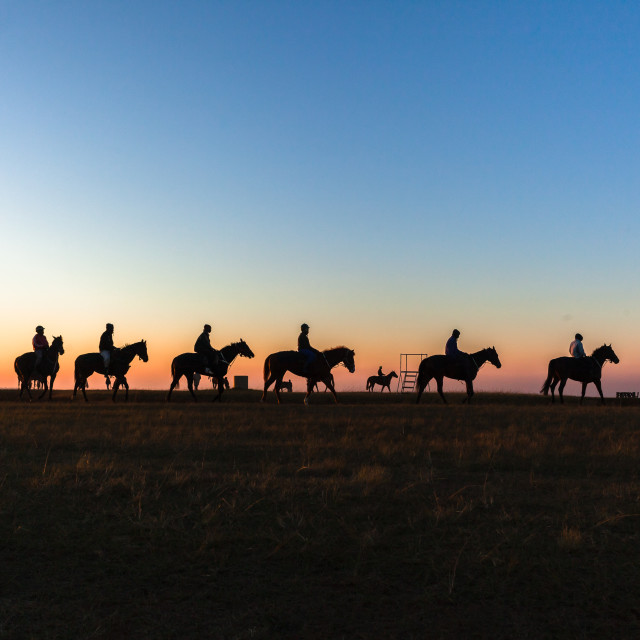 """""""Horses Riders Silhouetted Dawn"""" stock image"""
