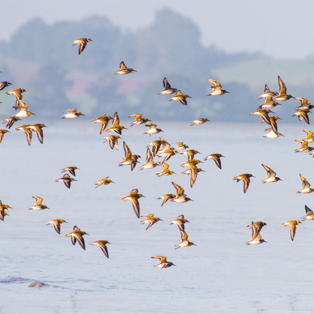 """Flock of Wading Birds"" stock image"
