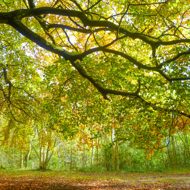 """Woodland in Autumn"" stock image"