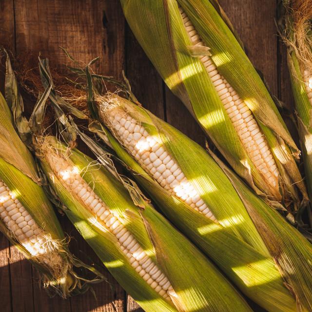 """Green Corns"" stock image"
