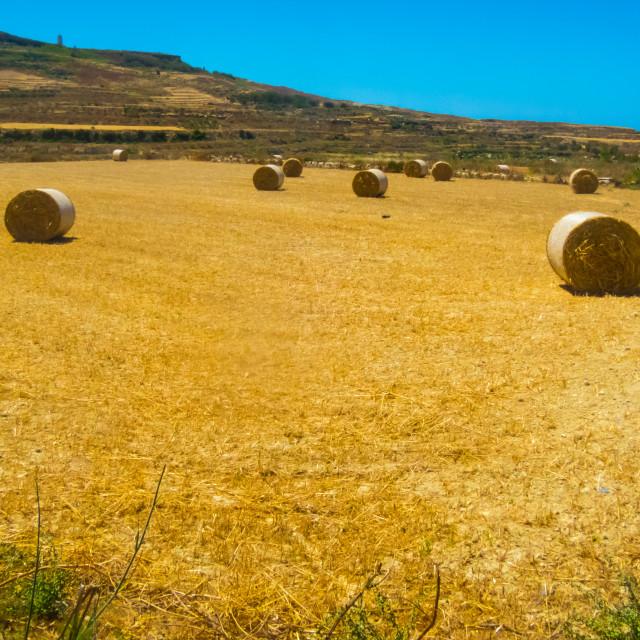 """Gozo harvest [1]"" stock image"