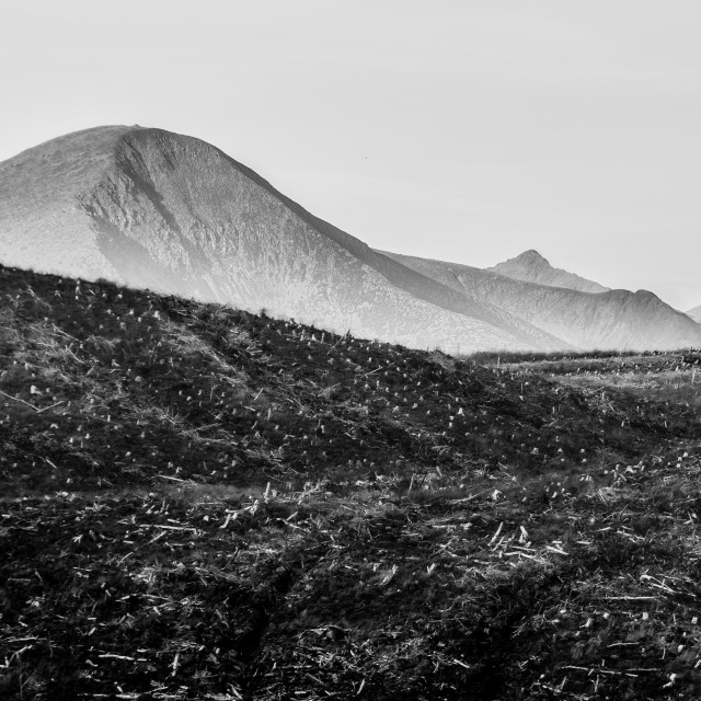 """FORESTRY APOCALYPSE, ISLE OF SKYE, SCOTLAND"" stock image"