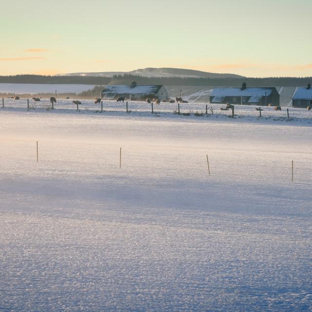 """WINTER MORNING LIGHT NEWBIGGING, SCOTLAND"" stock image"
