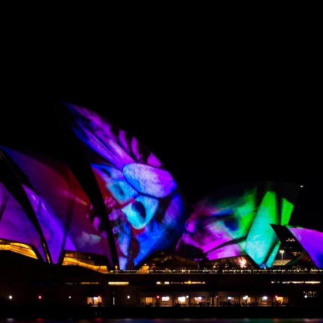 """Vivid Sydney Opera House"" stock image"