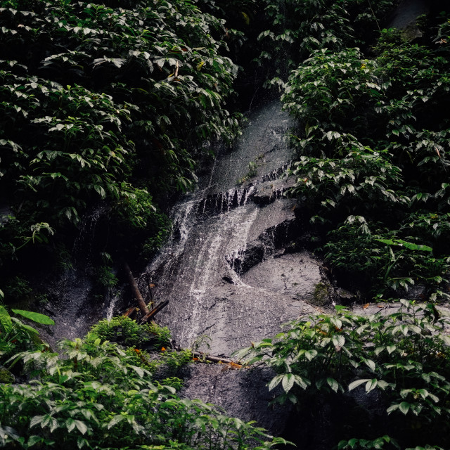"""Waterfall on rocks in jungle"" stock image"