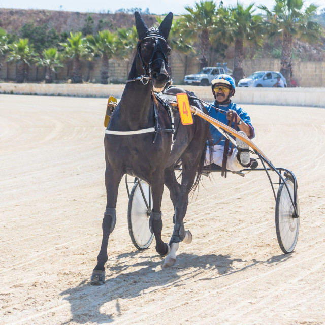 """Gozo Horse Race [1]"" stock image"
