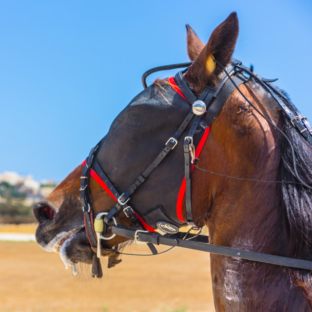 """Gozo Horse Race [53]"" stock image"