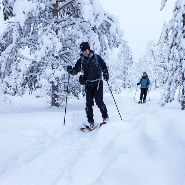 """Hikers Snowshoeing in the Pallas-Yllästunturi National Park Nea"" stock image"