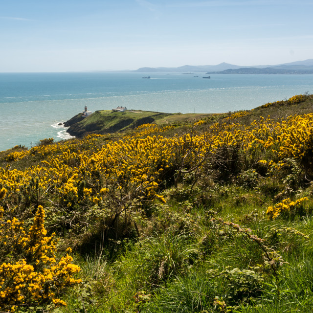 """Irish Summer at Howth"" stock image"