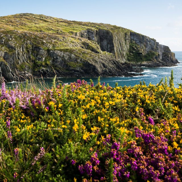 """Colours of Ireland"" stock image"