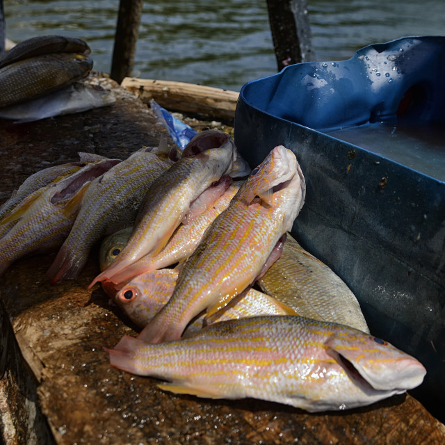 """Cleaned fresh fish"" stock image"