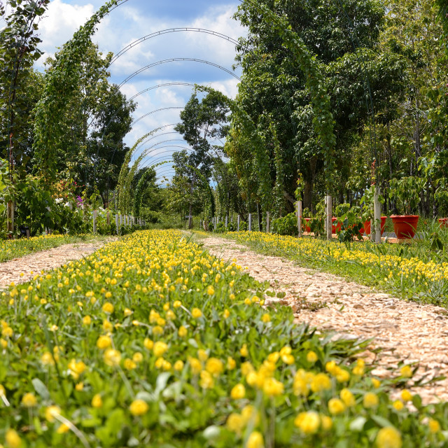 """""""Flowers growing on a road"""" stock image"""