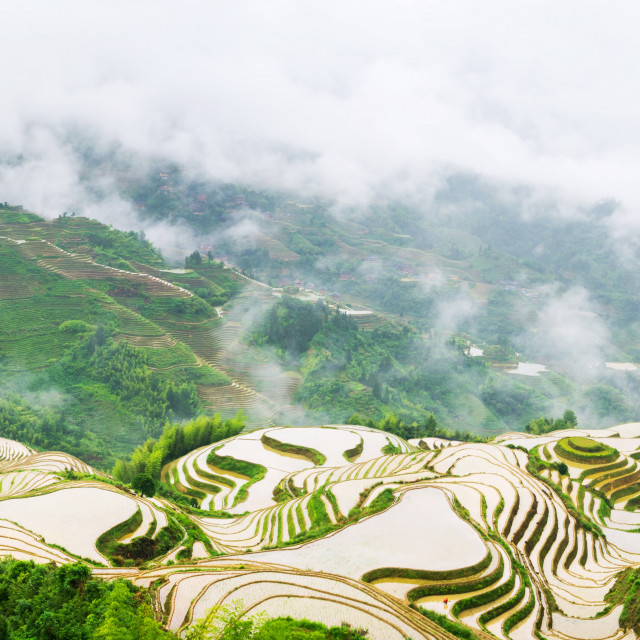 """Panorama of terraced rice field in Longji, Guilin area, China"" stock image"