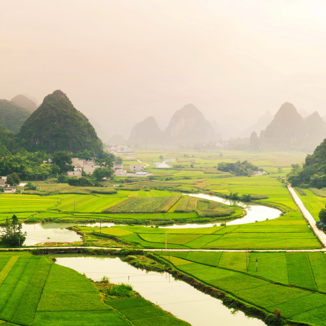 """Stunning rice field view with karst formations China"" stock image"