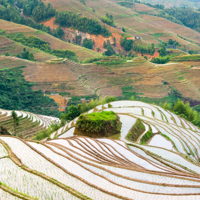 """Terraced rice field in Longji, Guilin area, China"" stock image"