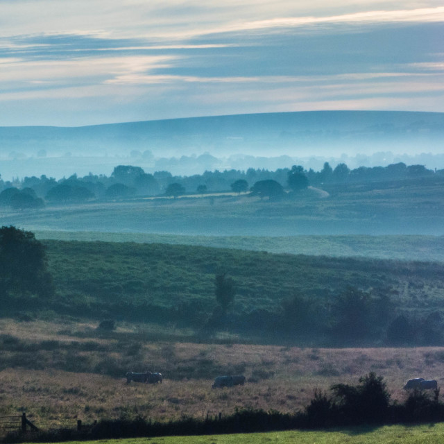 """""""Early morning mist in the valley"""" stock image"""
