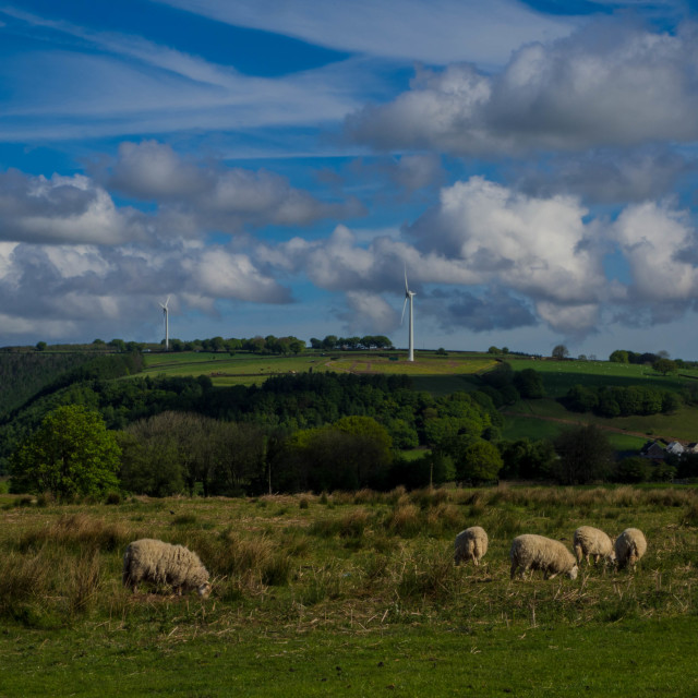 """Sheep on Gelligaer common, windmill"" stock image"
