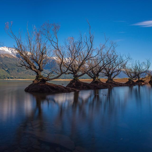 """Glenorchy Willow Tress. Long Exposure Panorama. Cloudless sky, calm Lake Wakatipu."" stock image"
