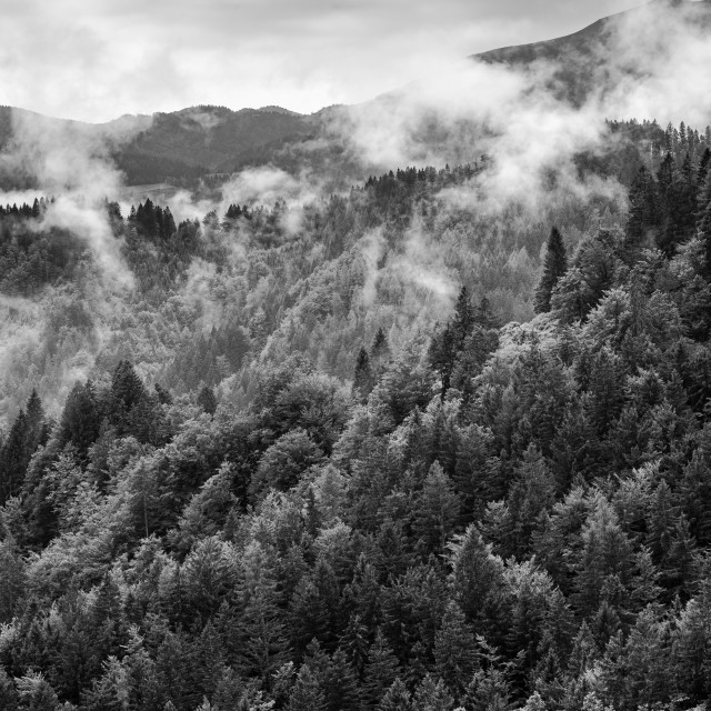 """""""Black and White dramatic mountain forest in mist"""" stock image"""