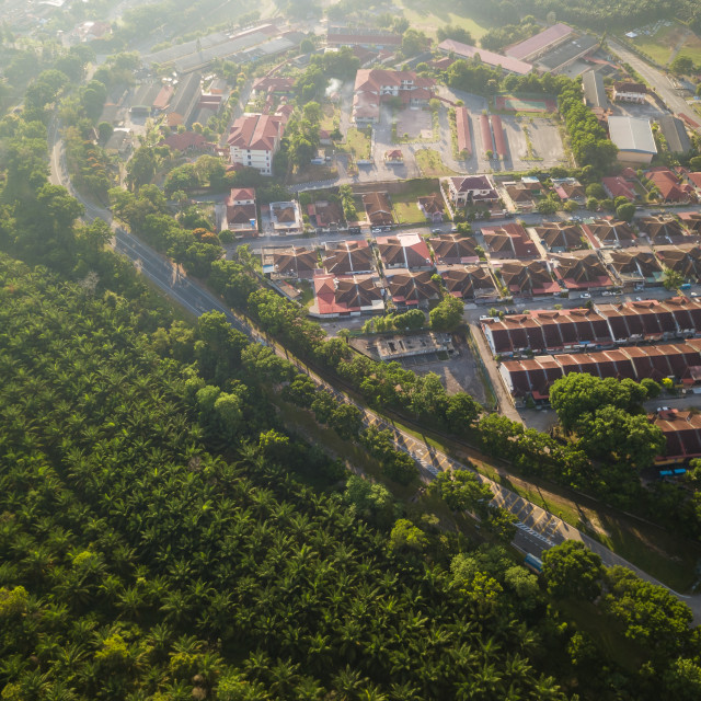 """Aerial View - Palm Oil Plantation and Housing Area"" stock image"
