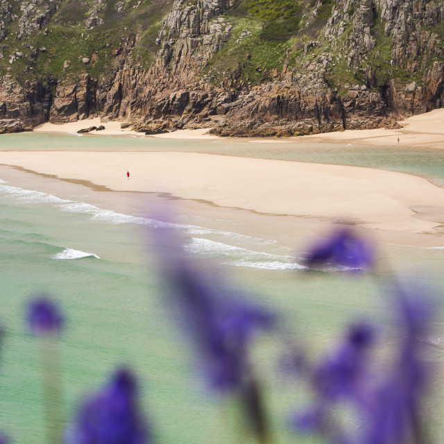 """Porthcurno in Cornwall in Spring with bluebells flowering."" stock image"