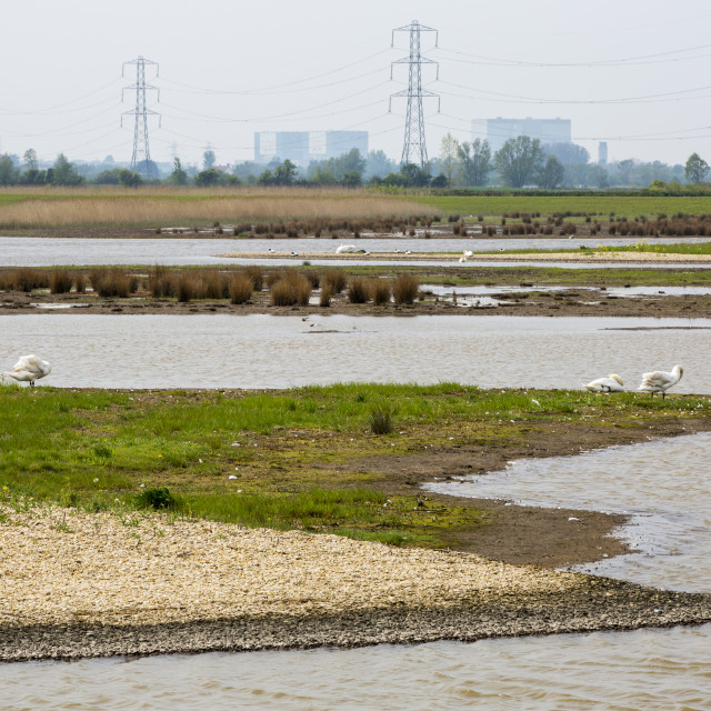 """Steart Marshes on the Parrot Estuary in Somerset. A wildlife reserve that has..."" stock image"