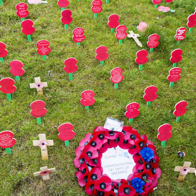 """Poppies to mark the centenery of the Battle of the somme at the Thiepval..."" stock image"