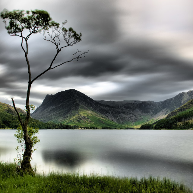 """The Lone Tree at Buttermere"" stock image"