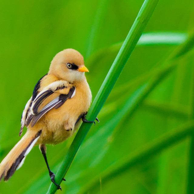 """""""in the reedbeds"""" stock image"""